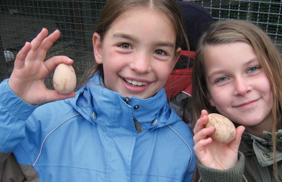 Eier finden in der Domäne Dahlem im Oskar-BauernhofCamp