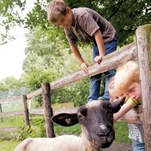 Im im Oskar-Bauernhof DayCamp Domäne Dahlem können Camper Ziege streicheln