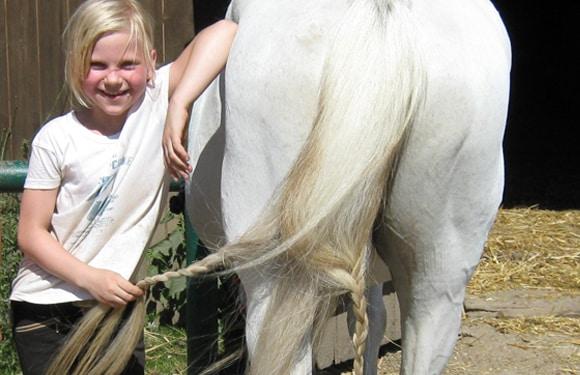 Pferdepflege im Oskar-ReitCamp auf Schloss Boitzenburg