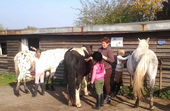 Pferdepflege gehört immer dazu, natürlich auch bei den Reiterferien Ostsee
