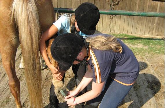 Hufe reinigen muss man auch während der Reiterferien lernen.