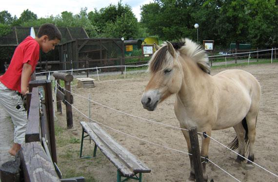 BauernhofDayCamp Lübars Fjordpferd
