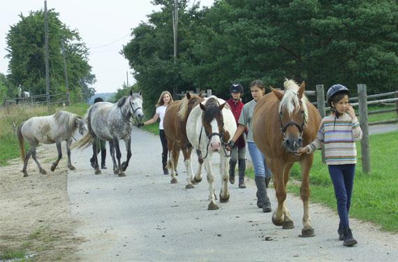 Reiter holen Pferde von der Koppel in den Reitferien.